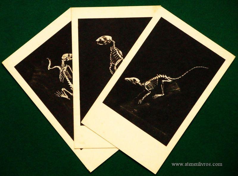 [3] Postais - Dinossauros - Museu Natural de Basel - «€3.00»